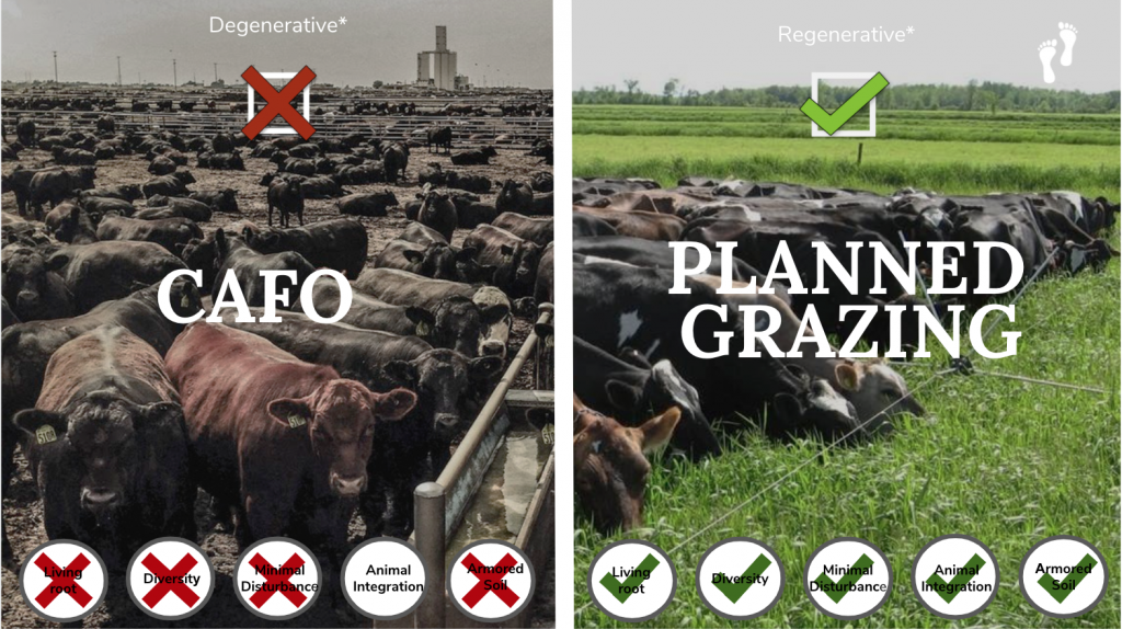 Grass fed cows vs. confinement grain fed cows.